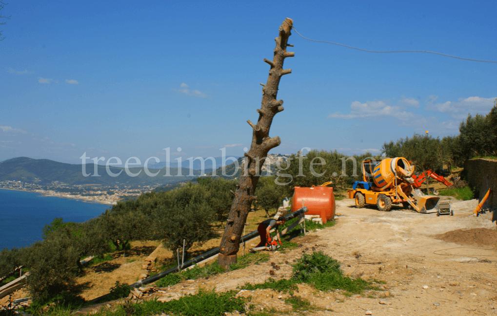 Tree Climbing Ferrara – Arboricoltura Perelli: abbattimenti controllati