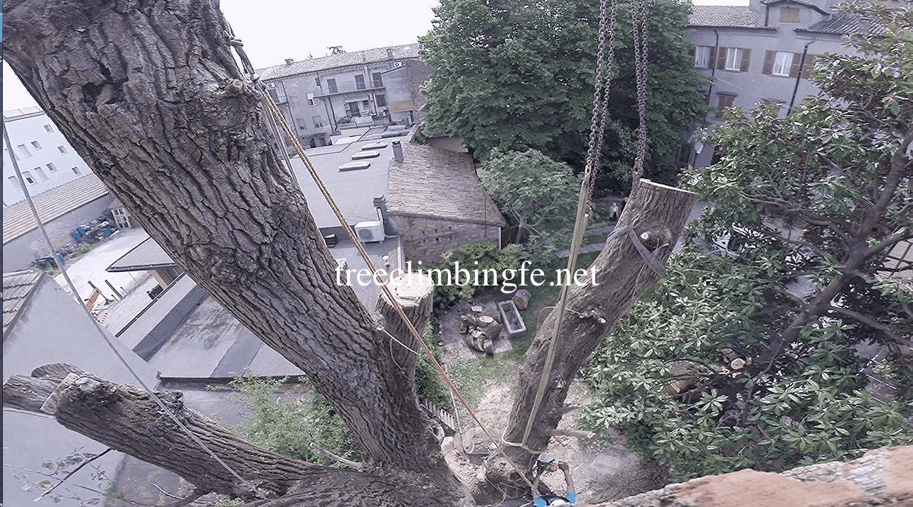 Tree Climbing Ferrara - Arboricoltura Perelli: abbattimenti controllati