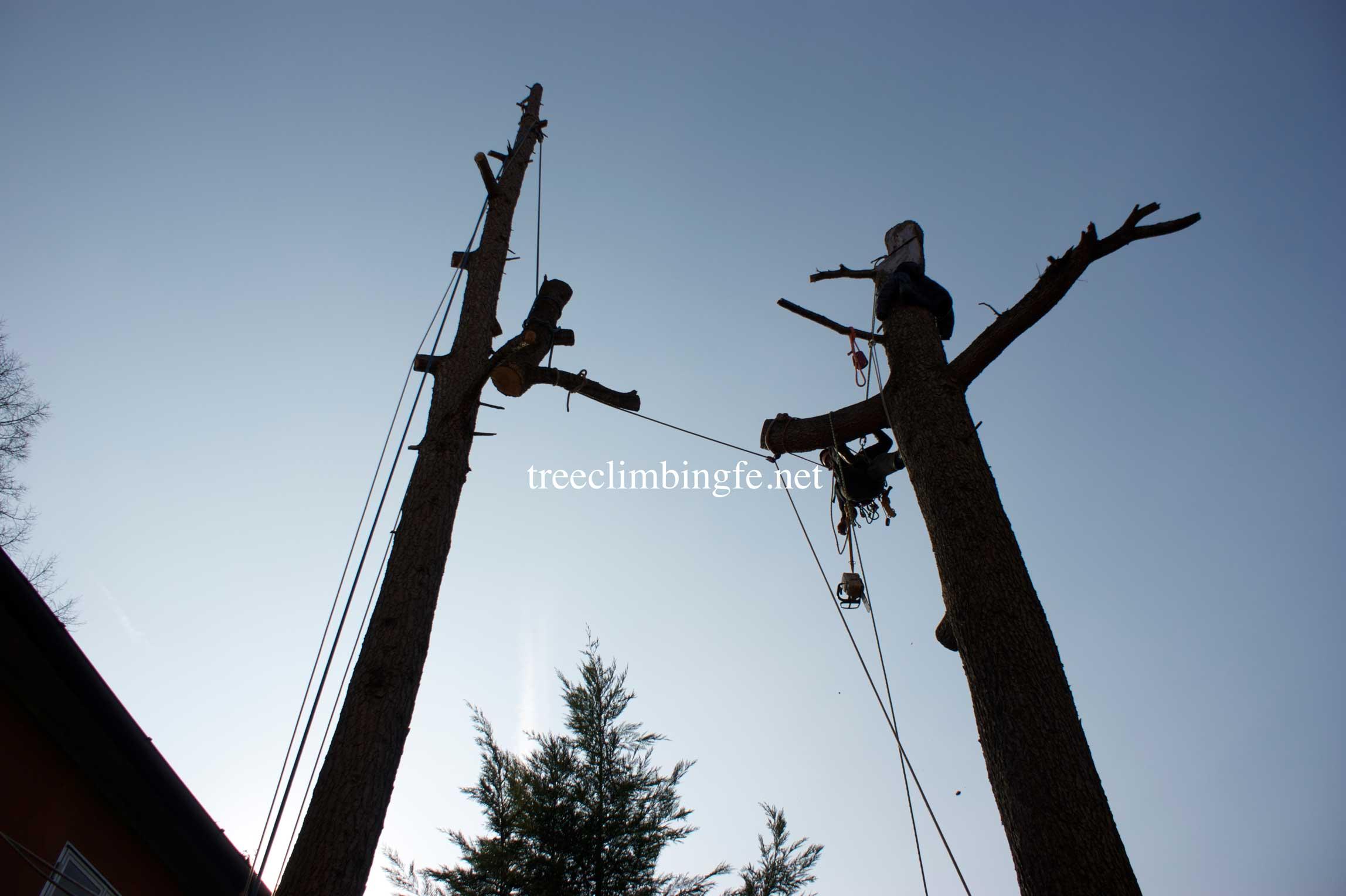 Tree Climbing Ferrara - Arboricoltura Perelli: abbattimenti svincolati