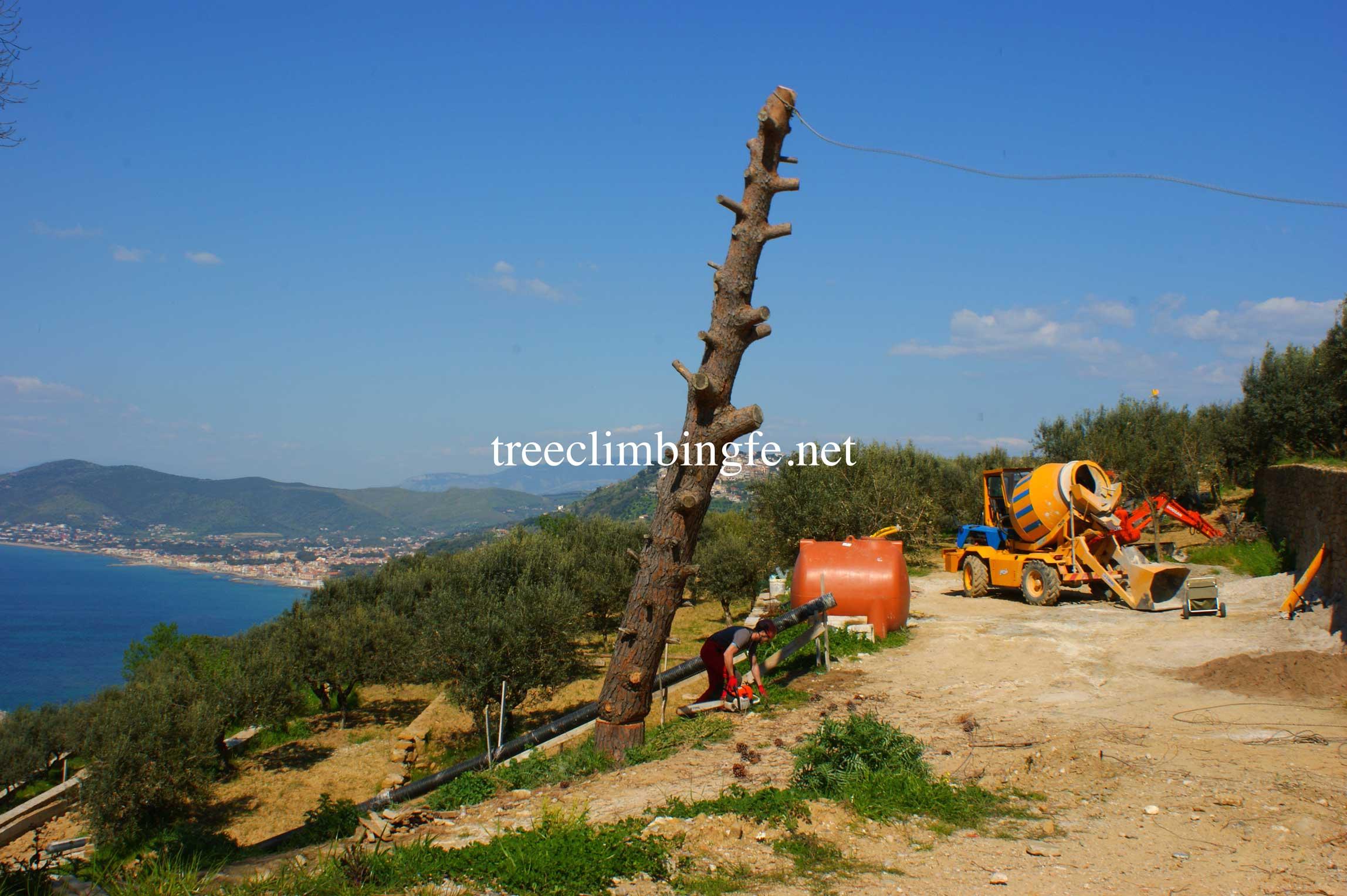 Tree Climbing Ferrara - Arboricoltura Perelli: abbattimento al piede