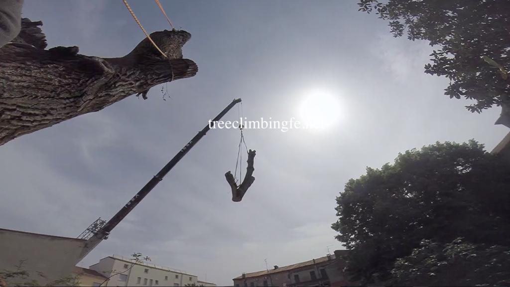 Tree Climbing Ferrara - Arboricoltura Perelli: abbattimento controllato albero alto fusto