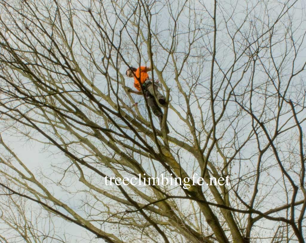 Tree Climbing Ferrara - Arboricoltura Perelli: arboricoltura moderna Tree Care