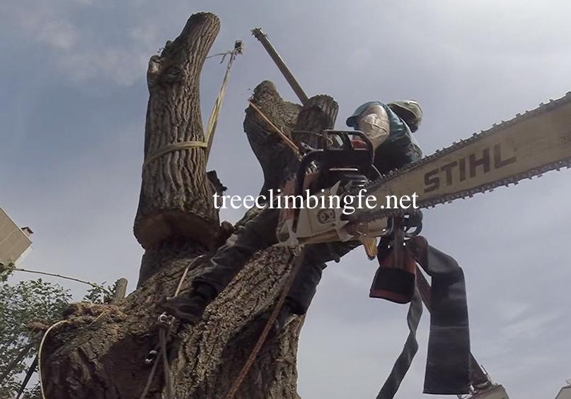 Tree Climbing Ferrara - Arboricoltura Perelli: attrezzature