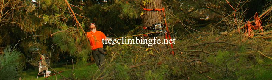 Tree Climbing Ferrara - Arboricoltura Perelli: servizio di potatura
