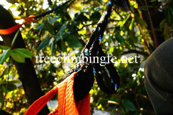 Tree Climbing Ferrara - Arboricoltura Perelli: attività di consolidamento