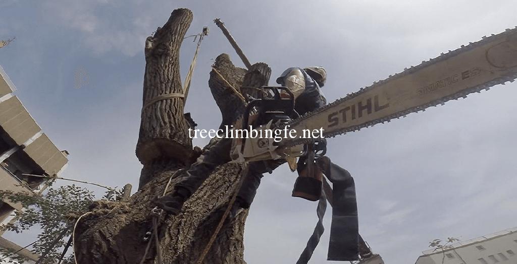 Tree Climbing Ferrara - Arboricoltura Perelli: attrezzature di un tree climber