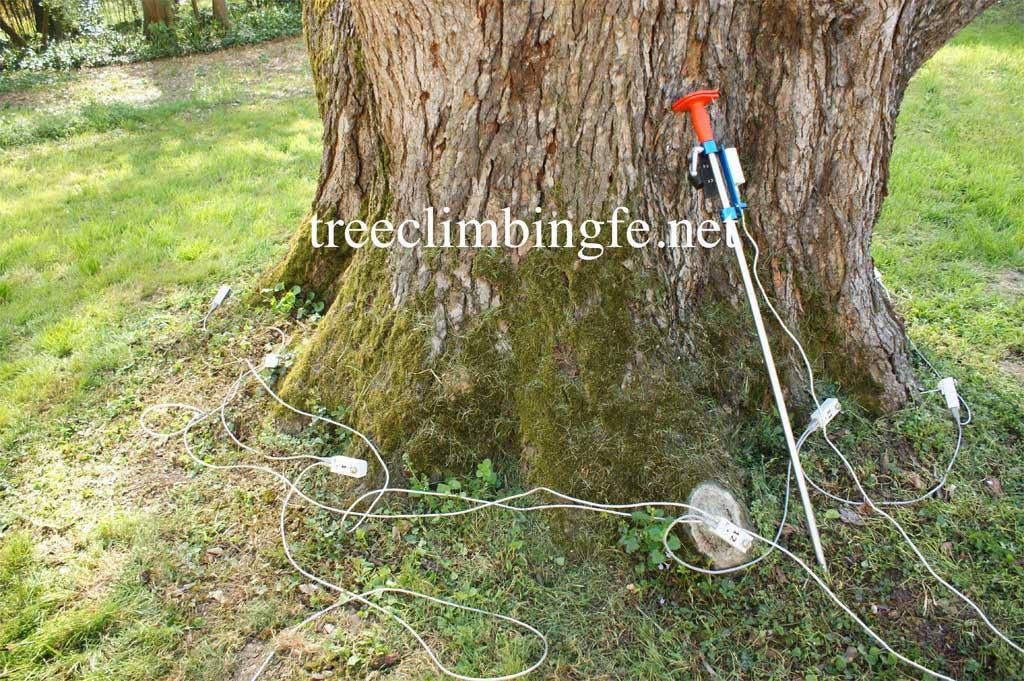 Tree Climbing Ferrara - Arboricoltura Perelli: attrezzature usate per fase strumentale