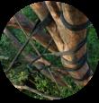Tree Climbing Ferrara - Arboricoltura Perelli: consolidamento alberi di alto fusto
