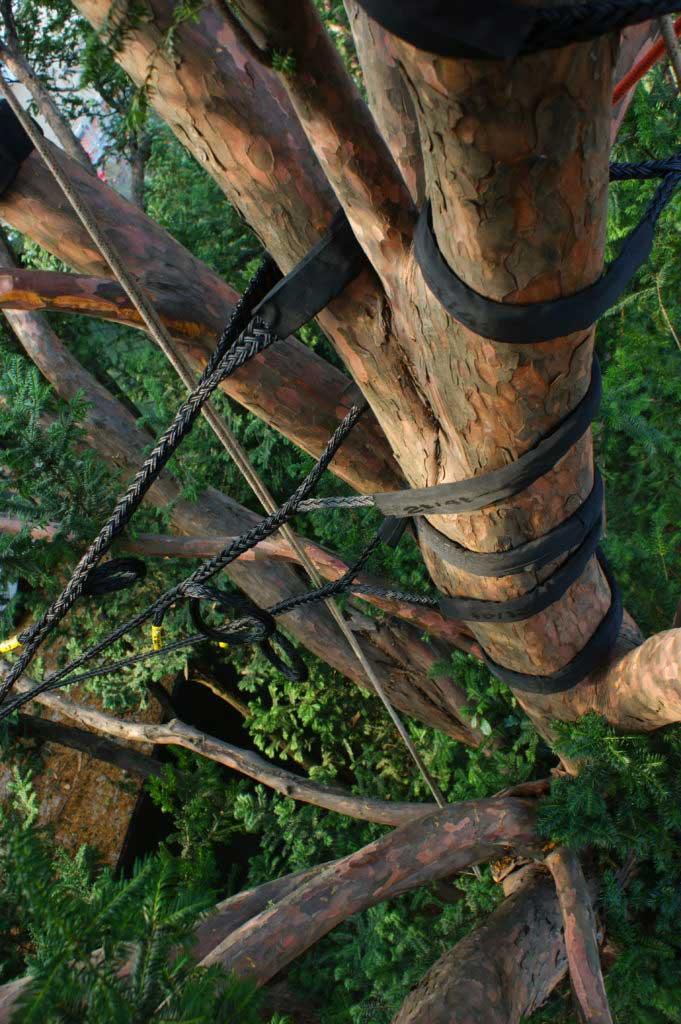Tree Climbing Ferrara - Arboricoltura Perelli: consolidamenti di alberi di alto fusto