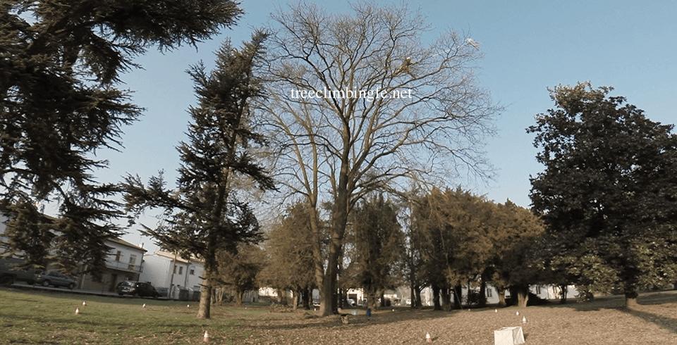 Tree Climbing Ferrara - Arboricoltura Perelli: dimostrazioni di tree climbing