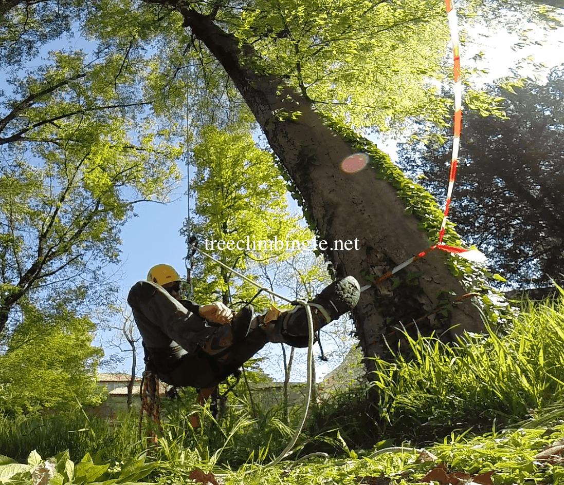 Tree Climbing Ferrara - Arboricoltura Perelli: discensori meccanici