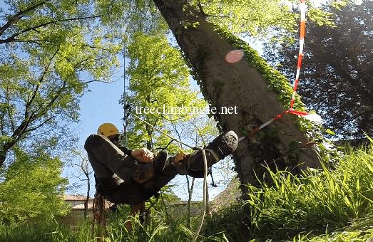 Tree Climbing Ferrara - Arboricoltura Perelli: (DPI) dispositivi di protezione individuale