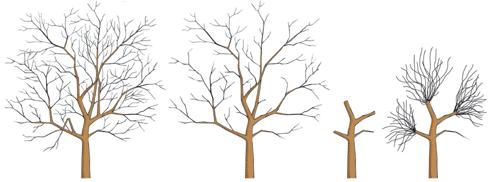 Tree Climbing Ferrara - Arboricoltura Perelli: esempio di potatura corretta e sbagliata
