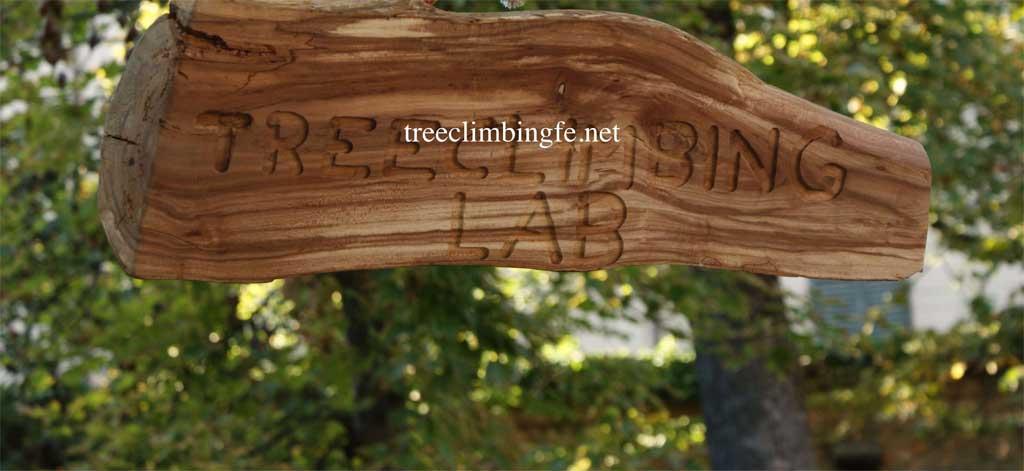 Tree Climbing Ferrara - Arboricoltura Perelli: laboratori di tree climbing