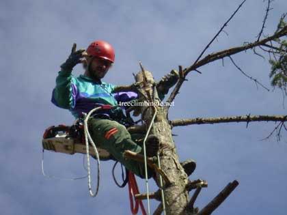 Tree Climbing Ferrara - Arboricoltura Perelli: Mauro Perelli tree worker certificato