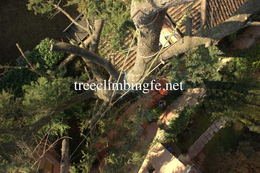 Tree Climbing Ferrara - Arboricoltura Perelli: messa in sicurezza albero alto fusto