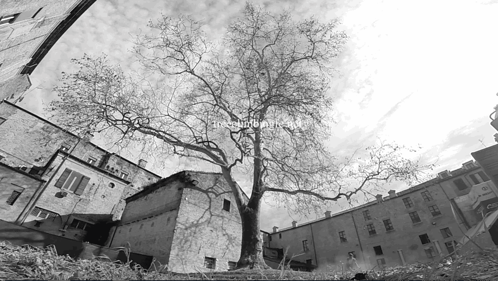 Tree Climbing Ferrara - Arboricoltura Perelli: potatura