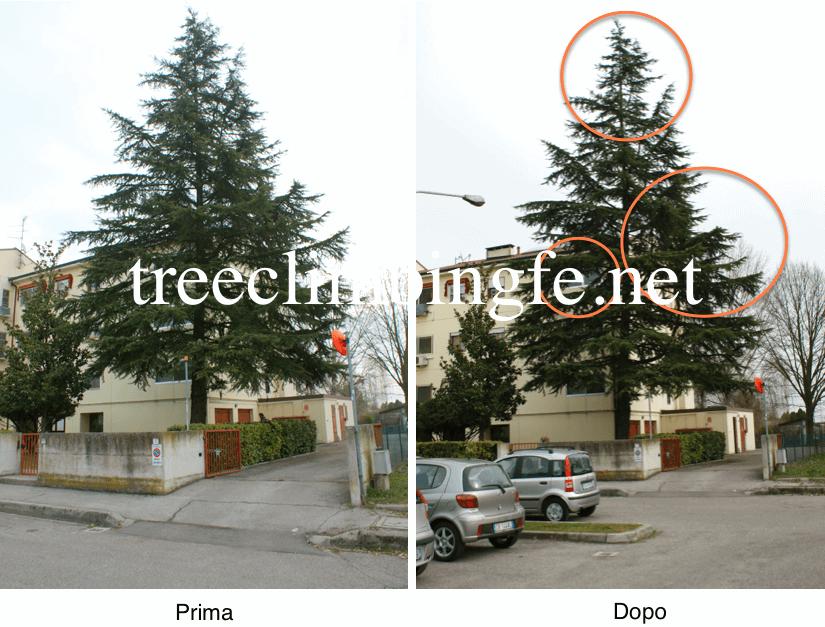 Tree Climbing Ferrara - Arboricoltura Perelli: prima e dopo intervento di potatura