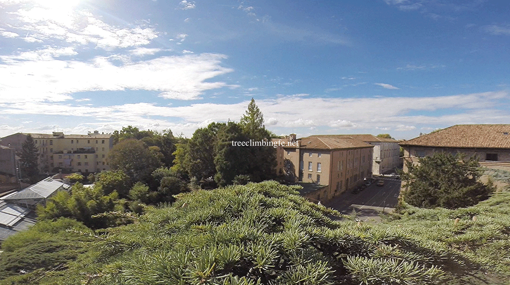 Tree Climbing Ferrara - Arboricoltura Perelli: progetto di conservazione del verde urbano