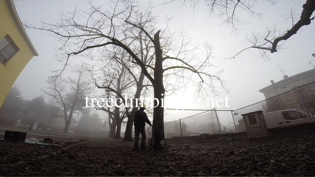 Tree Climbing Ferrara - Arboricoltura Perelli: riduzione parziale della chioma