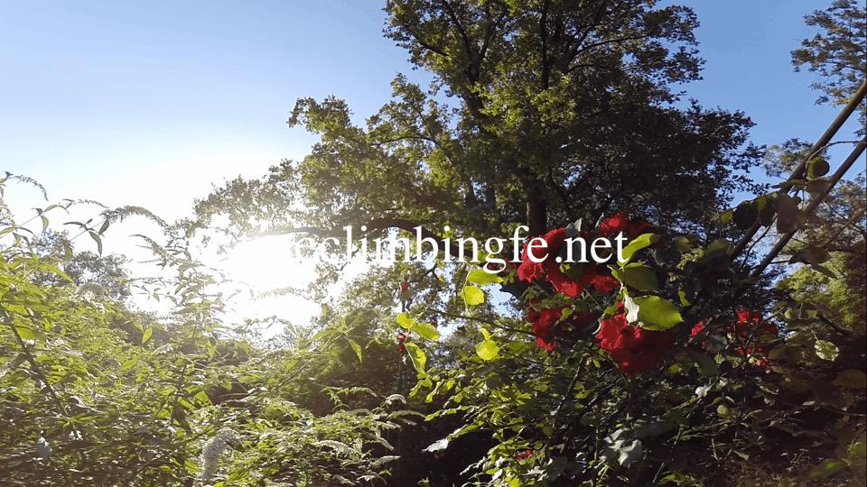 Tree Climbing Ferrara - Arboricoltura Perelli: rimonda del secco