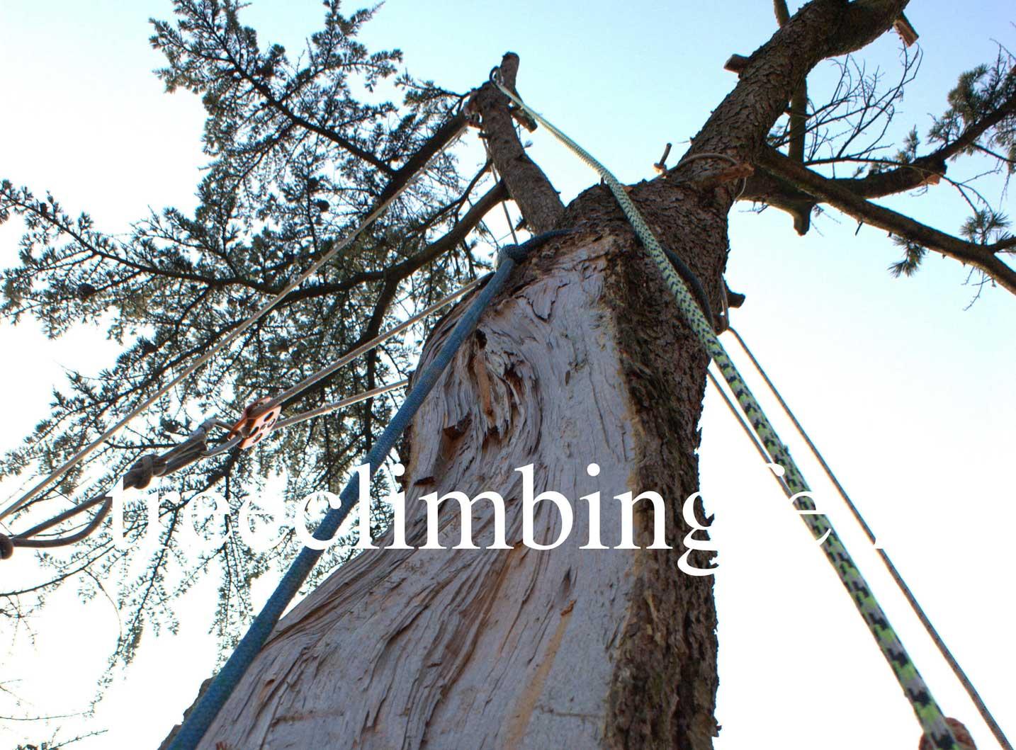 Tree Climbing Ferrara - Arboricoltura Perelli: servizio di pronto intervento