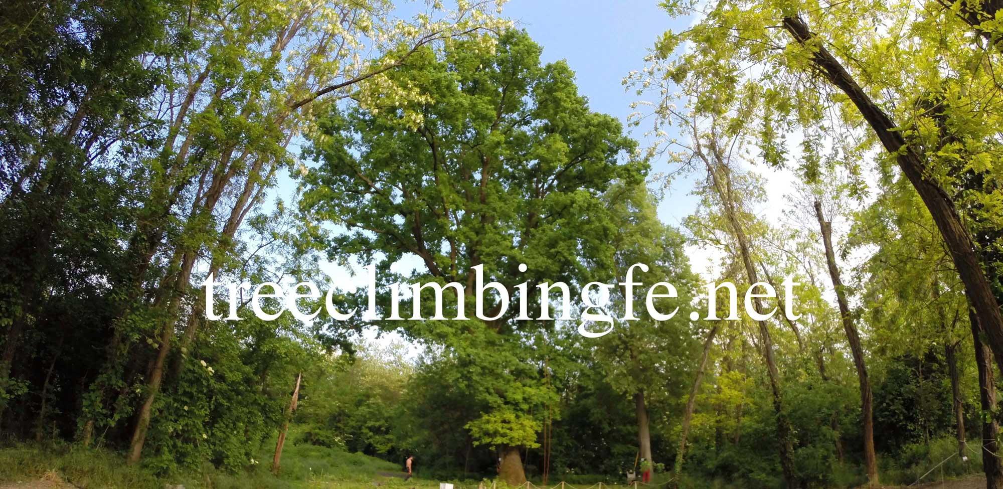 Tree Climbing Ferrara - Arboricoltura Perelli: servizio di rimonda del secco