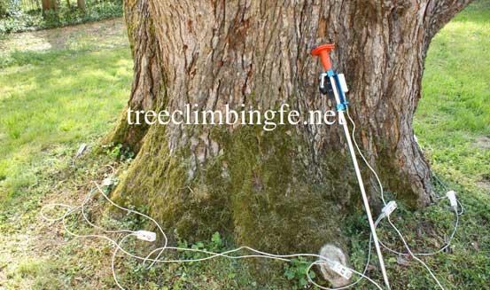 Tree Climbing Ferrara - Arboricoltura Perelli: servizio di valutazione di stabilità