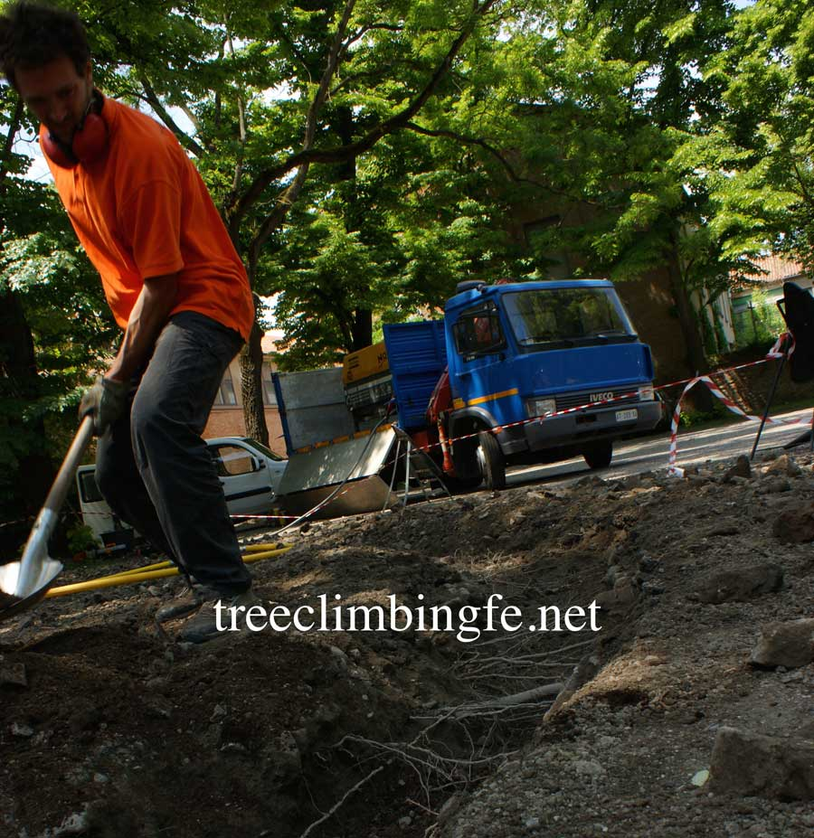 Tree Climbing Ferrara - Arboricoltura Perelli: tecnica di scavo AIR SPADE®