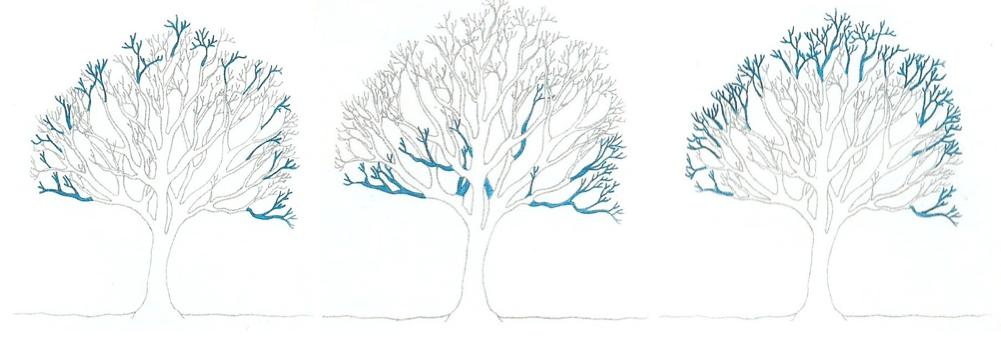 Tree Climbing Ferrara - Arboricoltura Perelli: tecniche di potatura alberi alto fusto