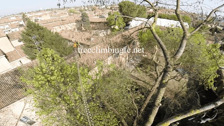 Tree Climbing Ferrara - Arboricoltura Perelli: tree climbing