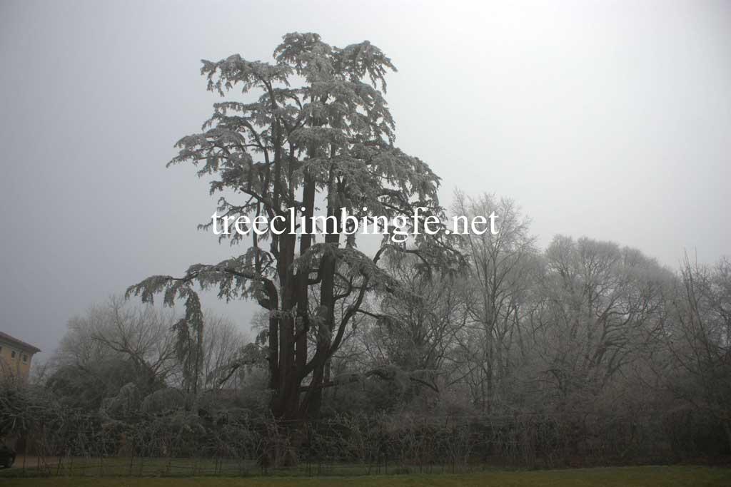 Tree Climbing Ferrara - Arboricoltura Perelli: valutazione di stabilità