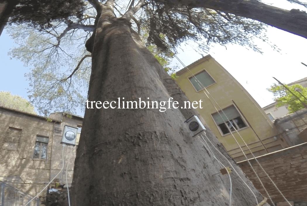 Tree Climbing Ferrara - Arboricoltura Perelli: Valutazione Strumentale