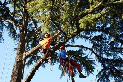 Tree Climbing Ferrara - Arboricoltura Perelli: dispositivi di protezione individuale