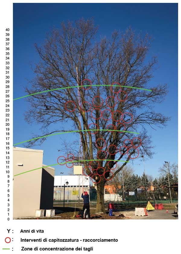 Tree Climbing Ferrara – Arboricoltura Perelli: analisi degli interventi pregressi